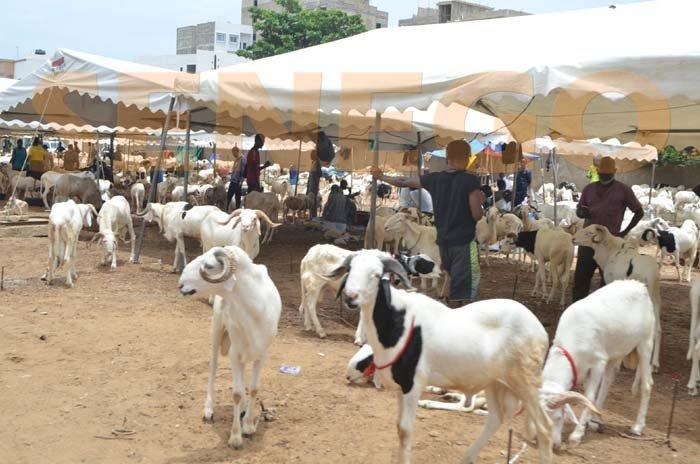 Moutons de Tabaski: Le Sénégal enregistre un surplus de 17, 42 % en 2020