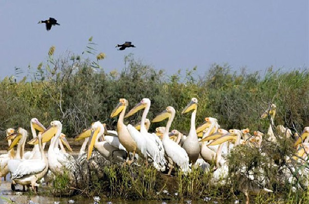 La biodiversité au Sénégal en péril : une alerte lancée par l'Uicn