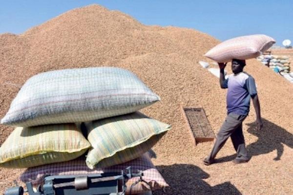 Commercialisation de l'arachide: C'est la grogne chez les saisonniers de la Sonacos Lyndiane