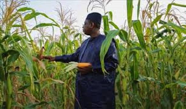 Zoom sur le discours à la Nation du Président Sall: L'agriculture, le poumon sauveur du Sénégal de la récession