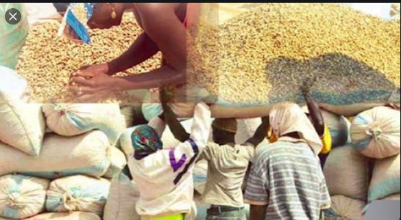 Vélingara / Campagne arachidière: Les contrôleurs économiques accusés d'arnaquer les opérateurs