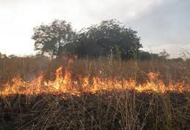 Kaffrine: Le cri du cœur des populations pour une protection contre les feux de brousse