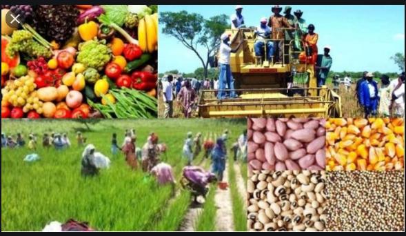 Agriculture au Sénégal: Les chiffres d'une campagne de toutes les performances