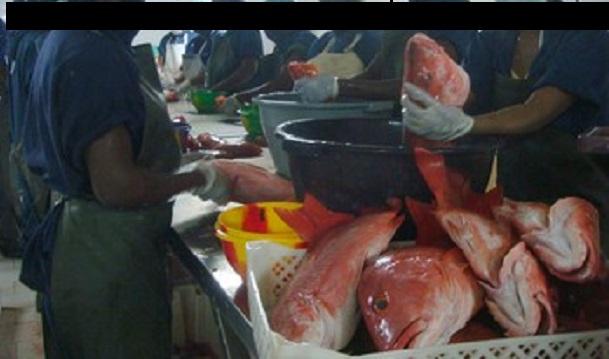 Tension à Keur Mousseu: Vive polémique autour de l'implantation d'une poissonnerie