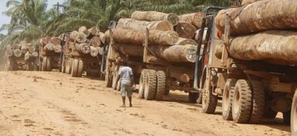 Exclusivité - Gambie : Dix-neuf containers remplis de bois en provenance de la Casamance, prêts à embarquer