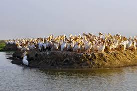 Parc de Djoudj: C'est la grippe aviaire qui a tué les 750 pélicans