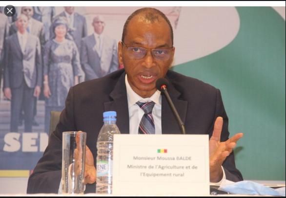 Kolda / Pr. Moussa Baldé, Ministre de l'Agriculture: Un adepte de logique dans sa démarche politique