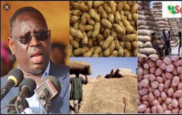 Campagne de commercialisation arachidière: Le Président Sall salue son bon déroulement