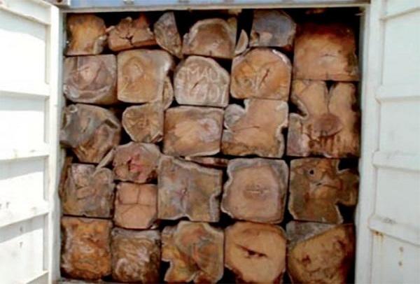 22 containers saisis, un suspect arrêté : la Gambie pose des actes qui rassurent contre le trafic de bois