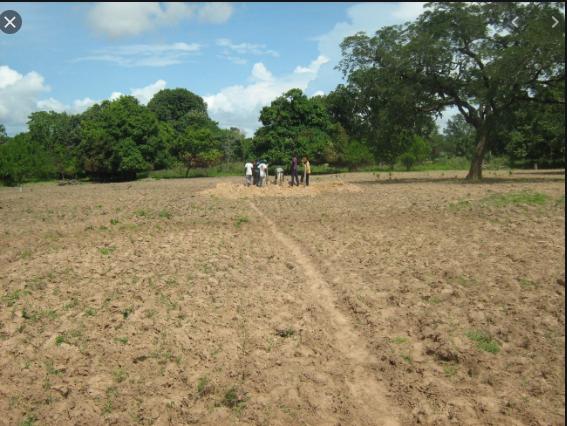 Litige foncier à Kébémer: 50 hectares attribués à un promoteur agricole, réclamés