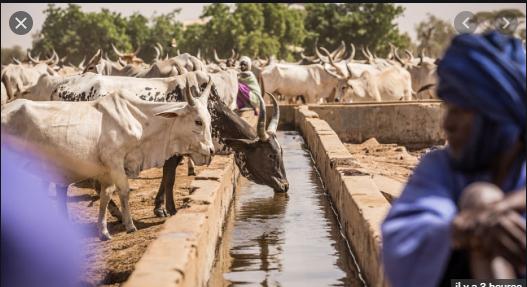 Résilience des systèmes pastoraux: La Banque mondiale débloque 209,5 milliards FCfa pour les pays du Sahel