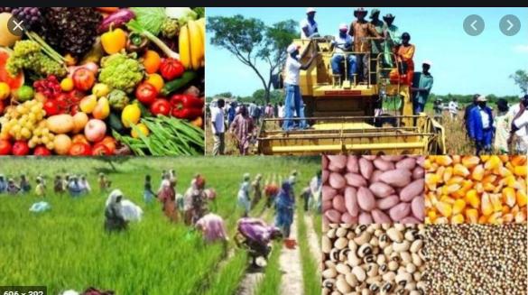 Campagne agricole 2021-2022: Macky Sall satisfait du déroulement
