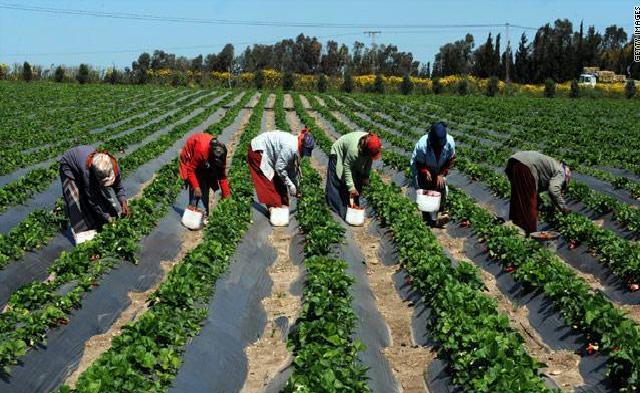 La production horticole à Cayar menacée: Les populations « déchirent » la licence d'exploration minière octroyée à une société privée