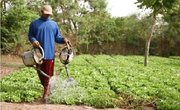 Echecs successifs de la campagne agricole: Les paysans du Saloum soupçonnent Macky Sall de soutenir le ministre de l'Agriculture