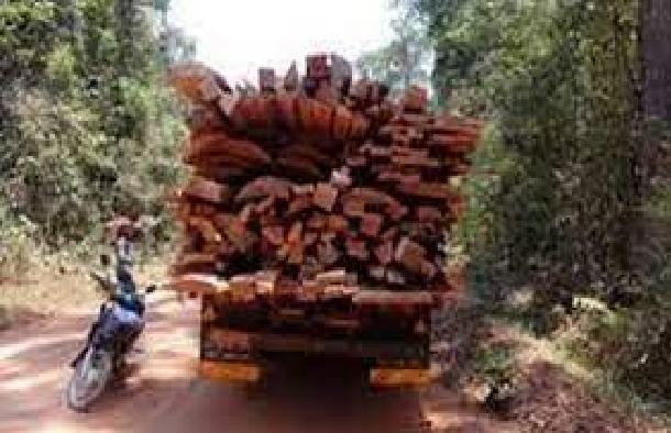 Casamance: Chaude traque aux trafiquants de bois jusqu'à la frontière gambienne