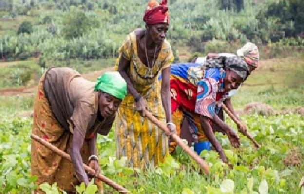 Production agricole: L'accès au foncier demeure un frein pour les femmes