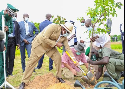 Journée de l'Environnement: Le Chef de l'Etat insiste sur la sensibilisation des populations