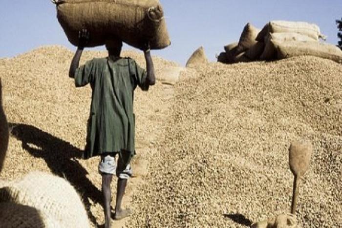 Filière arachidière: 2,056 milliards FCfa volés à des opérateurs qui pensaient spéculer sur...