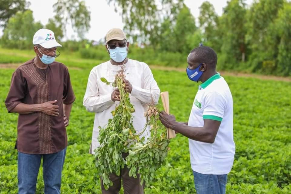 "Agriculture: ""Des productions record enregistrées"" (Abdoulaye Daouda Diallo)"