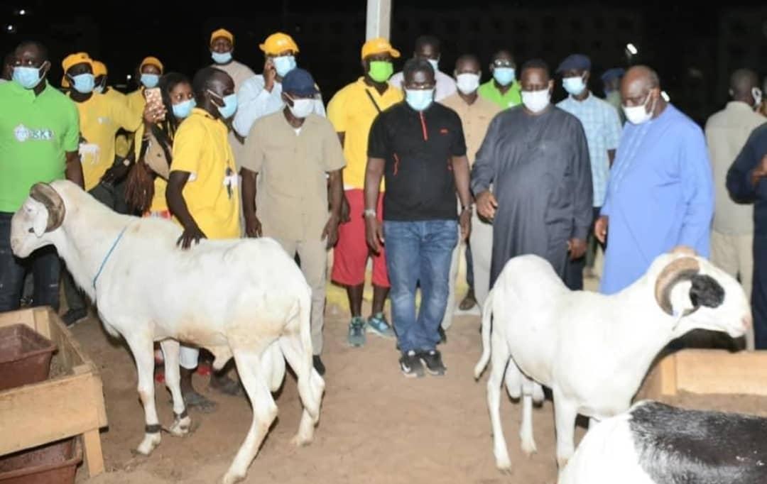 Macky Sall offre 5000 moutons de Tabaski, « sans condition de coloration politique »