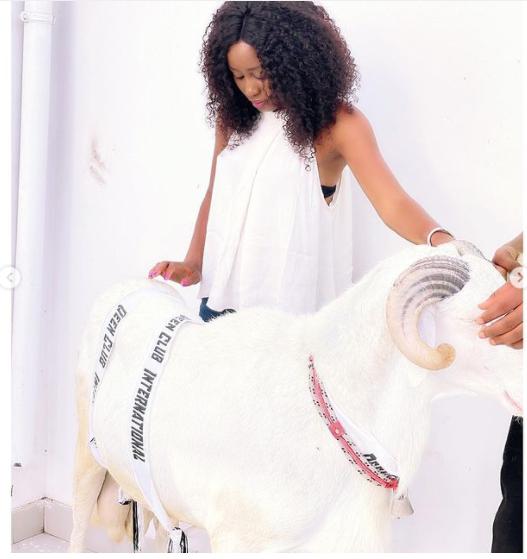 Tabaski 2021: Un gros mouton offert à Queen Biz par... (Photos)