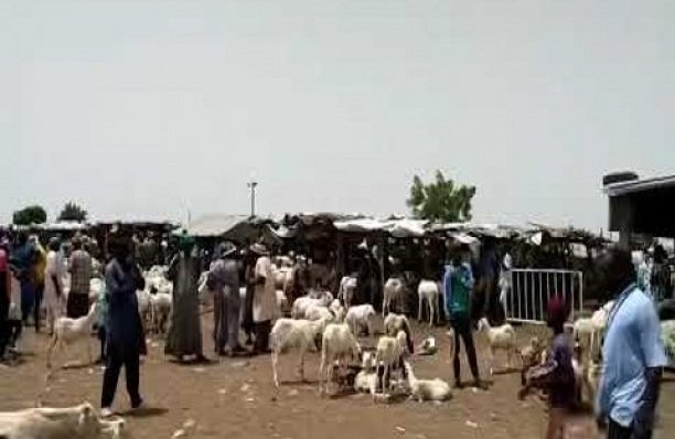 Insécurité, manque d'eau au foirail de Diourbel: Les principales préoccupations des éleveurs