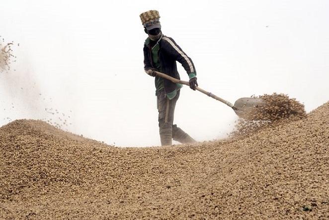 Kolda / Agriculture: Les opérateurs semenciers annoncent une plainte contre des huiliers