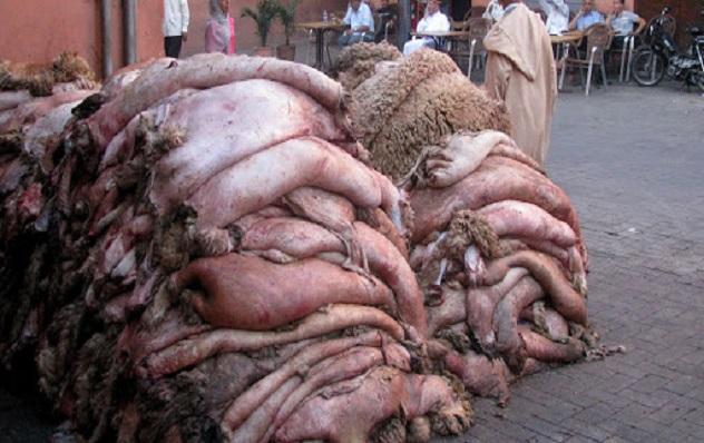 Vente de peaux de moutons après la Tabaski à Dakar :  Zoom sur un business qui s'est transformé