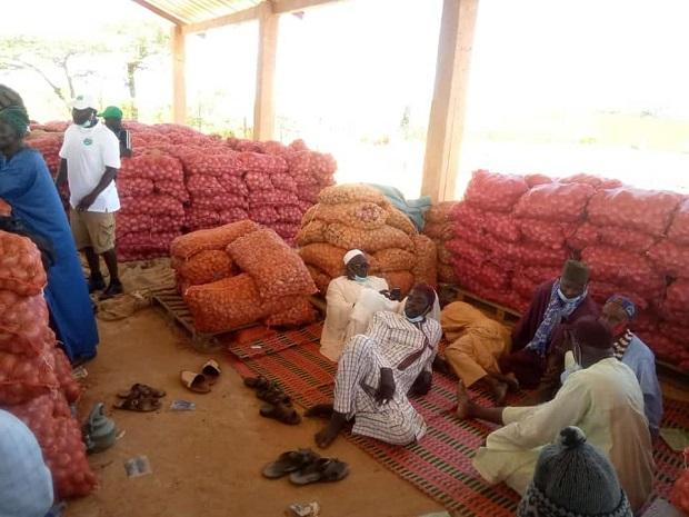 Les paysans de la zone des Niayes dans le désarroi: Le cri du cœur d'un citoyen à l'endroit du Président Macky Sall