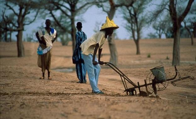 Manque d'eau grave à Ndoyene Peulh : Des agriculteurs morcellent leurs champs, des éleveurs poussés à la transhumance