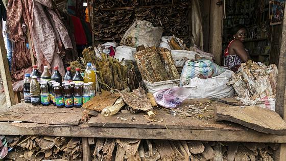 Médecine Traditionnelle: L'État du Sénégal apprécie à sa juste valeur la participation de ses praticiens