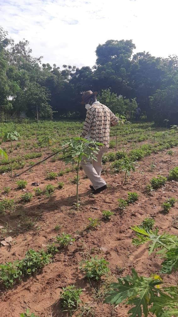 Diass / Consolidation de la relance agricole: Mamadou Ndione satisfait et donne rendez-vous à la récolte