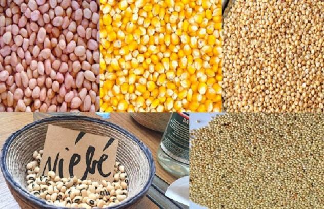 Désarroi des paysans devant le manque d'engrais, l'insuffisance de semences, la pause pluviométrique…: Des avis d'experts