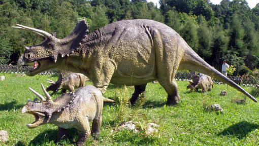 La famille des tricératops s'agrandit