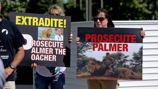 Mort du lion Cécil : Le Zimbabwe veut l'extradition du chasseur américain