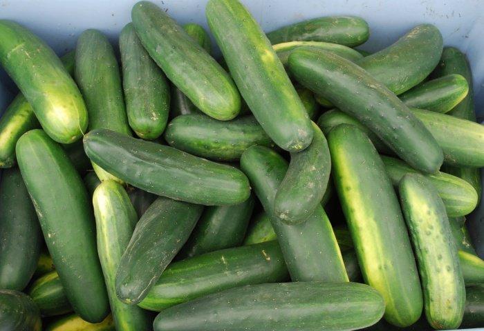 Découvrez 11 aliments qui vont faire monter votre libido en flèche ! Ça vaut le coup d'essayer, non ?