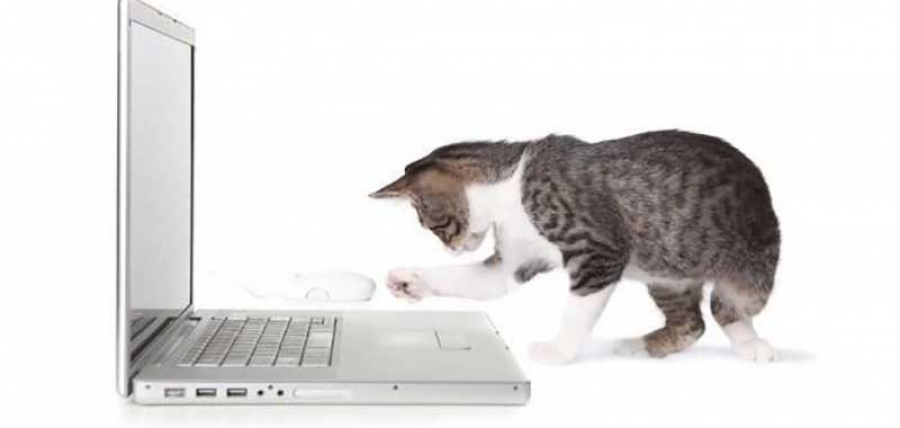 Un PC portable réservé... aux chats !