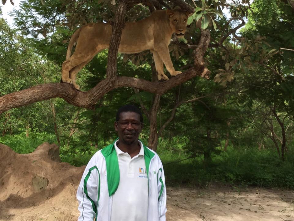 Le ministre Mary Teuw Niane se promène avec des lions