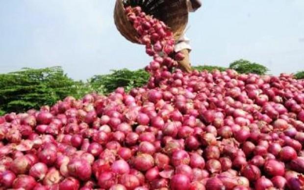 Le prix du kilogramme de l'oignon local explose et passe de 250 à 500 FCfa