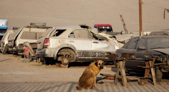 Un enfant abandonné est sauvé par une chienne ! Ce qu'elle a fait pour lui est incroyable ! Vous n'en croirez pas vos yeux…
