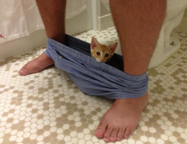 30 photos qui prouvent enfin que les chats et le respect, ça fait deux… Quels malpolis !
