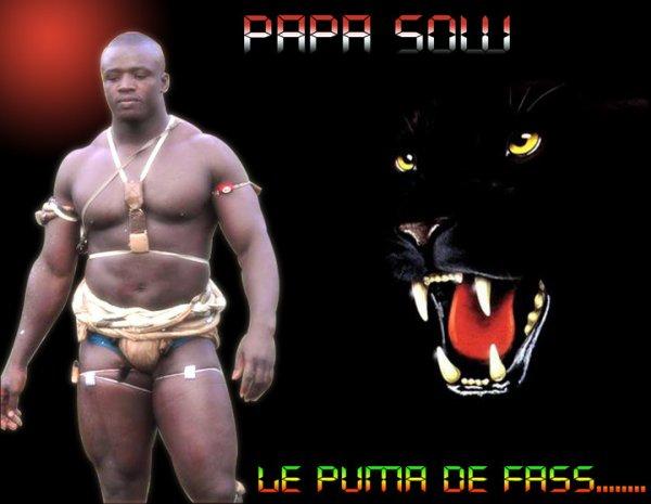 Papa Sow de l'écurie Fass : « Mes potentiels adversaires sont dans le tournoi TNT »