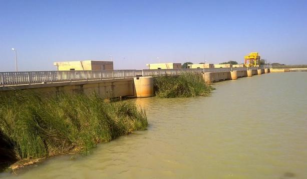 Riziculture : La JICA arme le Sénégal