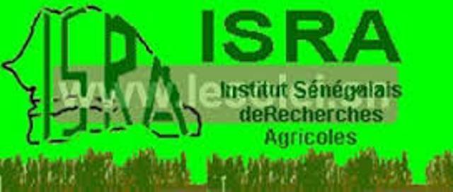 Exclusif: Gros scandale à l'Isra : 110 millions détournés, Saliou Mboup écroué.