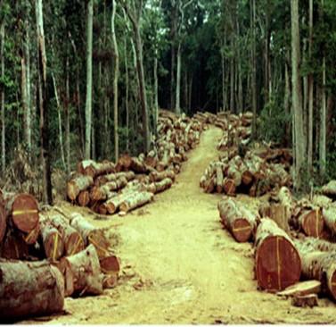 Bignona : Climat et forêts et développement…Le conseil départemental de Bignona pose le débat