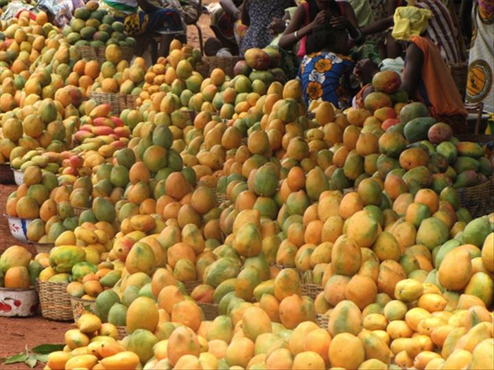 Lutte et contrôle des mouches des fruits en Afrique de l'Ouest : L'Afd et la Cedeao injectent plus de 15 milliards pour éradiquer le fléau