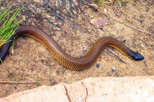 Des serpents hantent le sommeil des malades à l'hopital Le Dandec