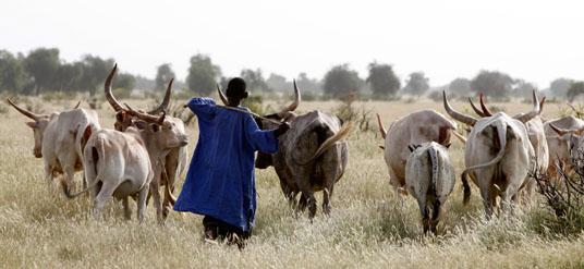 Linguère : Un jeune berger battu à mort par son cousin