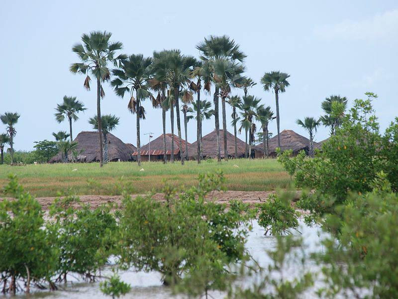 Agents sénégalais arrêtés en Gambie : Ils avaient pour mission de procéder à une cartographie de la demande de veille environnementale...