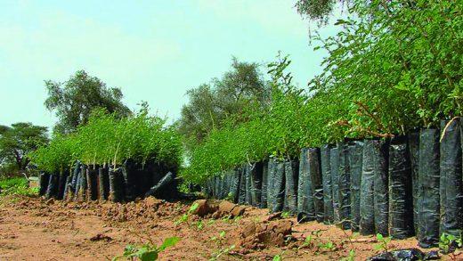 Environnement : Dakar abrite une conférence sur la grande muraille en mai